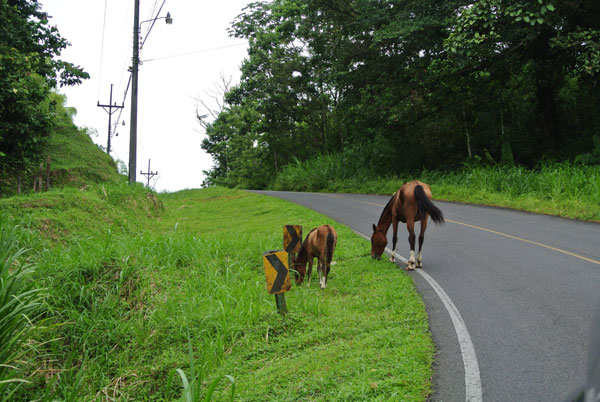 drive-from-guanacaste-to-la-fortuna2